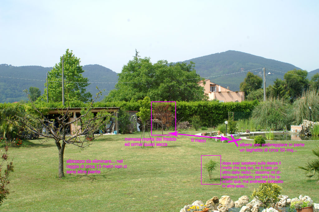 Alberi da mettere in giardino for Alberi fioriti da giardino