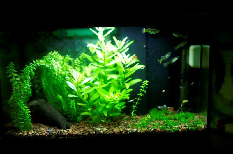 il mio acquario - Acquario Per Gambusie